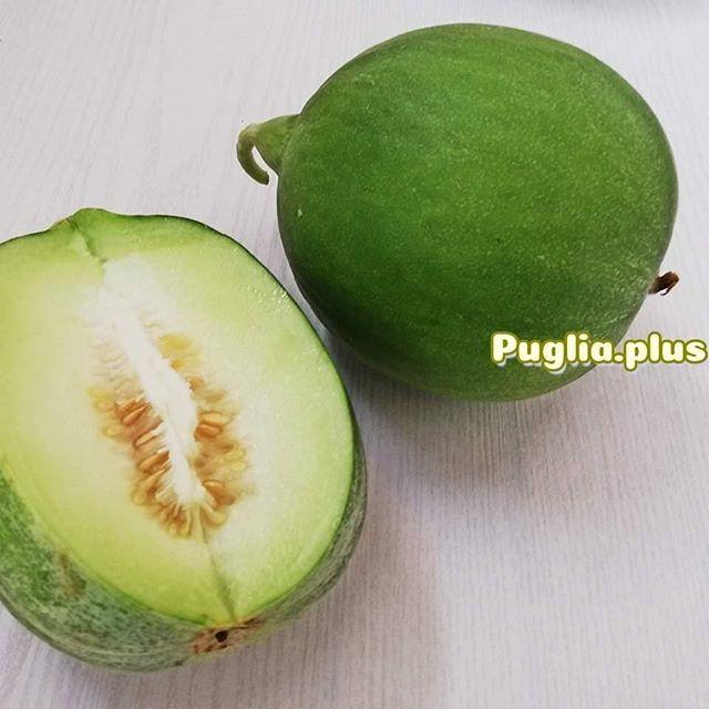 Die Barattiere ist eine typische apulische Sorte: eine erfrischende Melone, die ein wenig an Gurke erinnert. Perfekt für heiße Tage. #apulienentdecken #apulien #apuliengeniessen #mahlzeit #lokalesorten #heimischesgemüse #heimischesobst #vielfalt #süditalien #typischapulisch