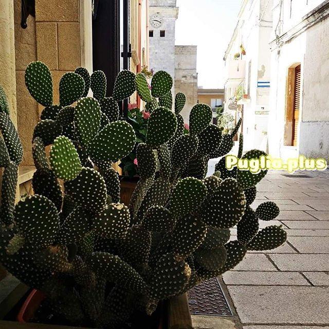 """Das entzückende Castro liegt auf einem Felsen über der Adriaküste, mitten im Salento.  Auf www.puglia.plus unter """"Sehenswürdigkeiten"""" haben wir das hisotrische Zentrum von Castro vorgestellt. #ausflugstipp #apulien #Castro #opuntia #kunsthandwerk #keramik #adria"""