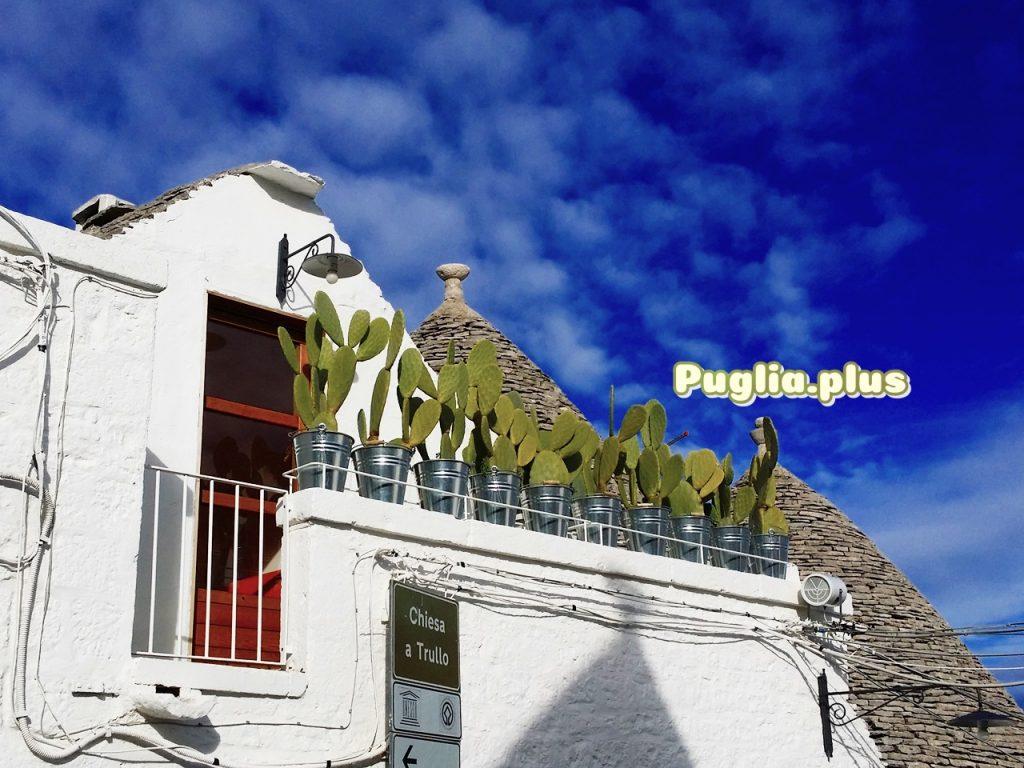 Kaktusfeigen als Dekoraktion in Alberobello mit Trulli