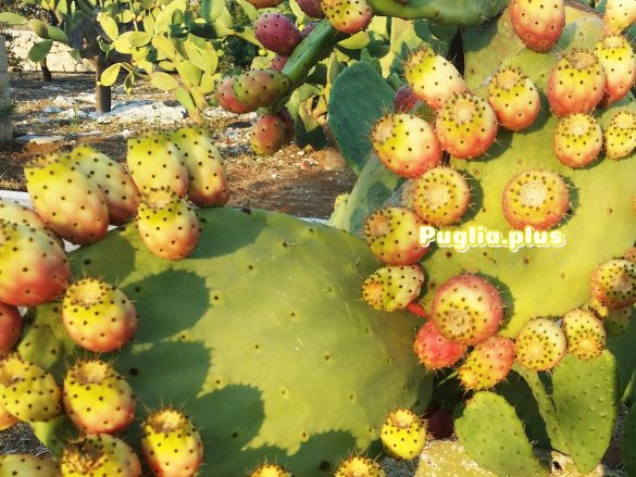 Kaktusfeige lecker, gesunde Frucht Superfood
