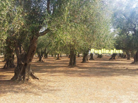 Urlaub am Biobauernhof Apulien