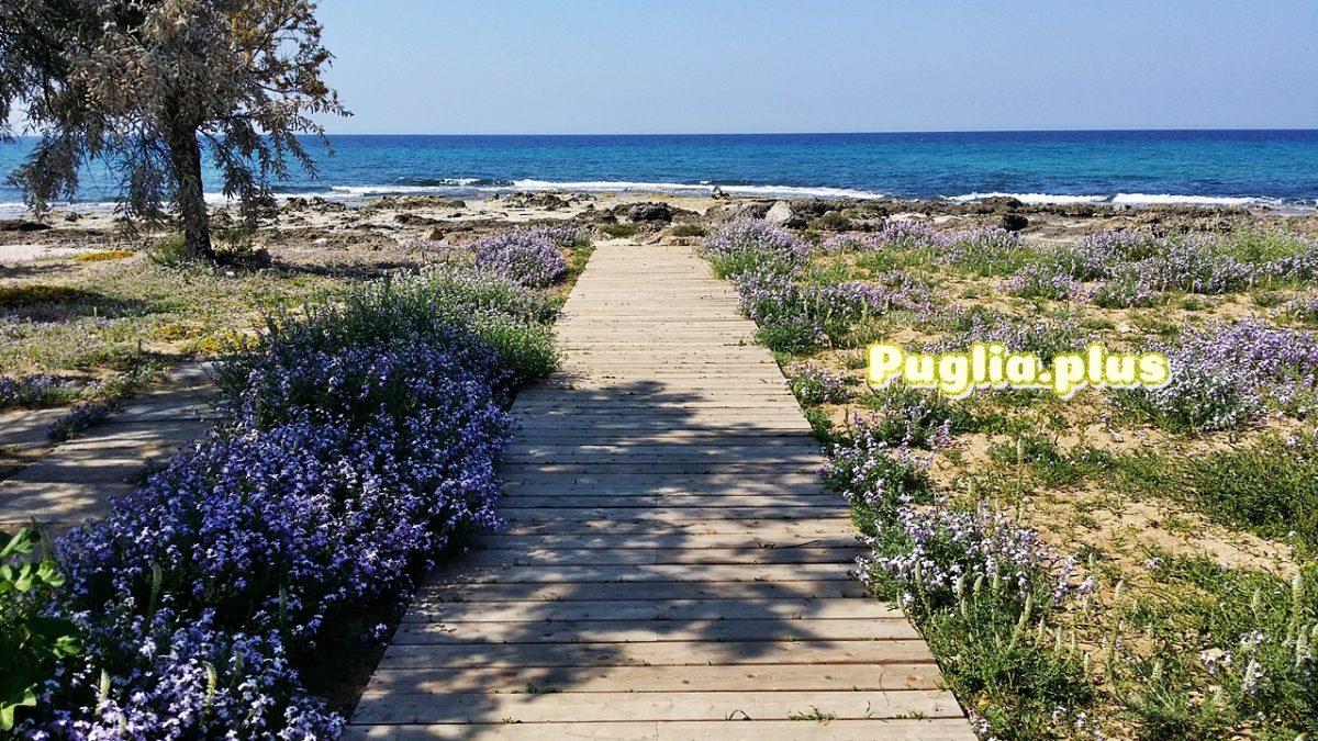 Apulien im Frühjahr: Meeresbrise und Blütenmeer