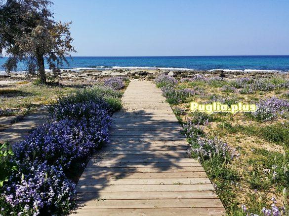 torre an giiovanni blaues Meer und Blütenpracht