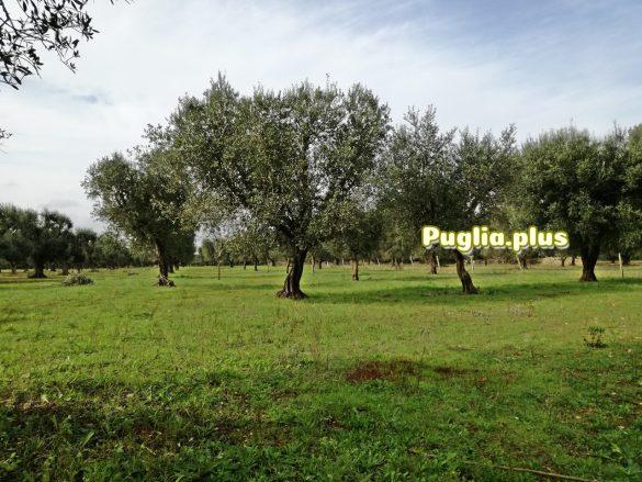 Herbsurlaub Apulien